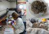 Studying xenophyophores and macrofauna from boxcores