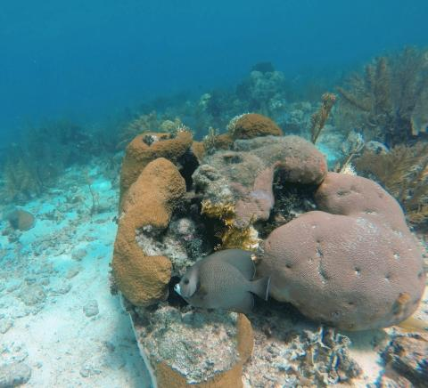 Coral Reef Belize