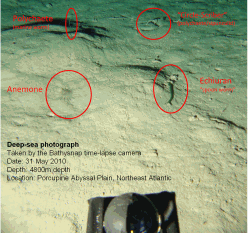 Image taken by bathysnap of seafloor at PAP site in 2010