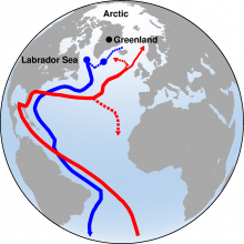 A schematic of the meridional overturning circulation where red lines show the northward flowing warm waters, and the blue lines, the deep water formed through open ocean convection.